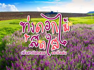 5 ทุ่งดอกไม้สดใส เพื่อสาวโลกสวยแวะวิ่งเล่น