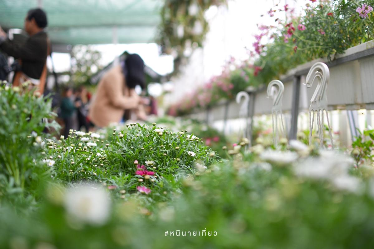 สวนดอกไม้ดาลัด